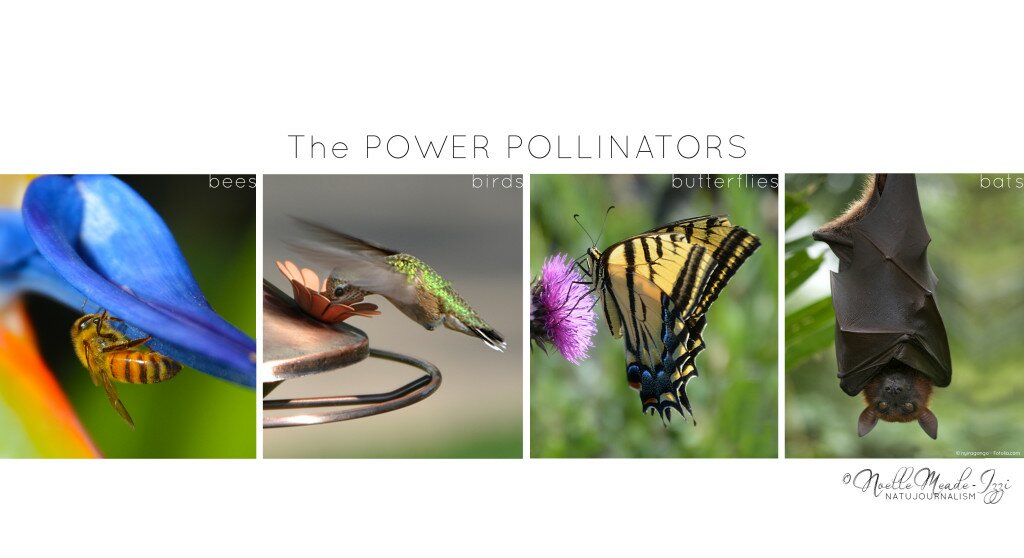 Power Pollinators (1)
